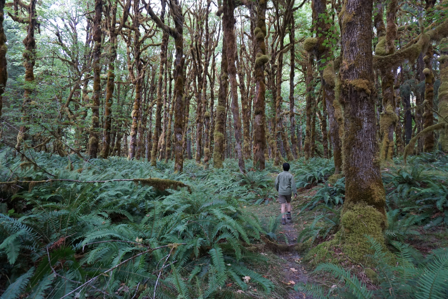 Olympic-National-Park04