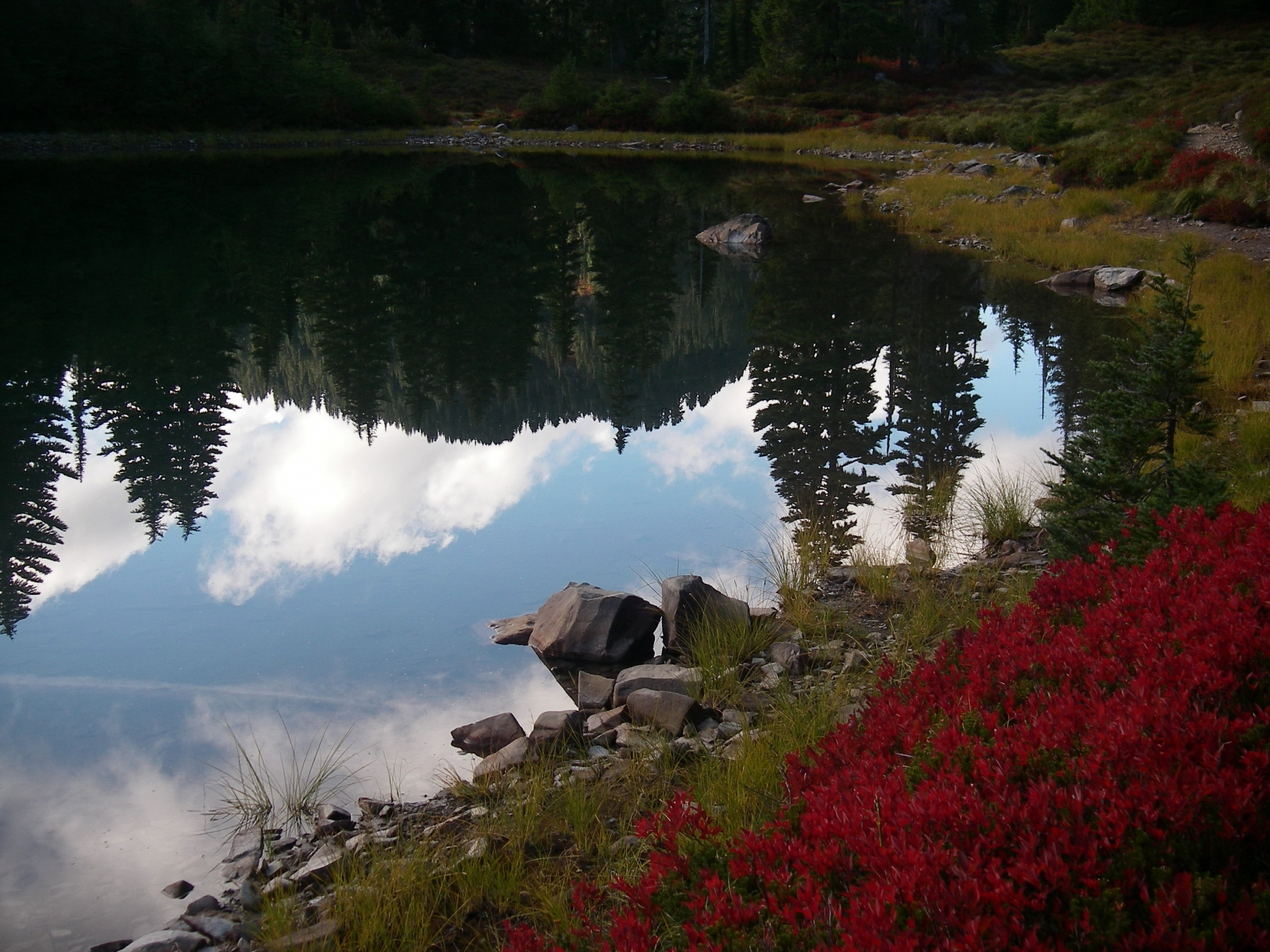 Olympic-National-Park06